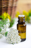 Essential yarrow oil Stock Photography