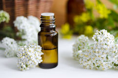 Essential yarrow oil Royalty Free Stock Image