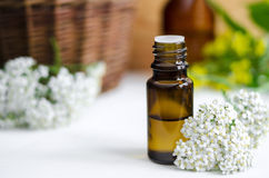 Essential yarrow oil. Small bottle of essential yarrow oil Royalty Free Stock Images