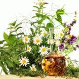 Essentie met medische installaties en verse kruiden Stock Fotografie