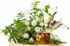 Essentie met medische installaties en verse kruiden Stock Foto