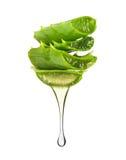 Essenza dalla sgocciolatura della pianta di vera dell'aloe dalle foglie su bianco fotografie stock libere da diritti