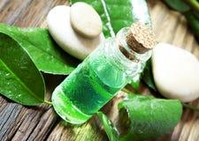 Essenza dell'albero dell'olio essenziale Bottle.Tea Fotografia Stock Libera da Diritti