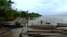Essequibo River scenery stock video footage