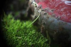 Essere umano contro il tappo di bottiglia Moss Abstract Background della natura immagini stock