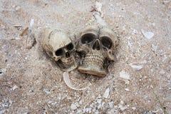 essere umano del cranio su legname Fotografia Stock