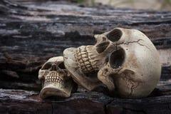 essere umano del cranio su legname Immagine Stock