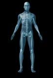 Essere umano di scheletro su priorità bassa nera illustrazione di stock
