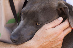 Essere umano e cane preoccupantesi di salvataggio fotografia stock