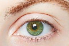 Essere umano, macro sana dell'occhio di verde Immagine Stock Libera da Diritti