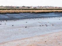 essex för kust för blått vatten för sikt för strömflodlandskap bred flodmynning med Arkivbild