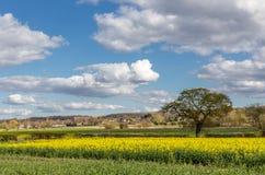 Essex-Landschaft auf Ackerland im Frühjahr Lizenzfreie Stockbilder