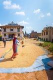 Essiccamento d'agricoltura femminile nepalese di Sun del raccolto di grano Fotografia Stock Libera da Diritti