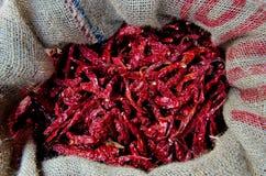 Essiccamento dei peperoncini rossi Fotografie Stock