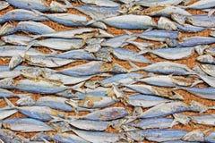 Essiccamento dei pesci al sole Fotografie Stock