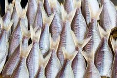 Essiccamento dei pesci freschi Fotografie Stock