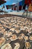 Essiccamento dei pesci in su salati Fotografia Stock Libera da Diritti