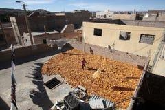 Essiccamento del cereale, Marocco Immagine Stock Libera da Diritti