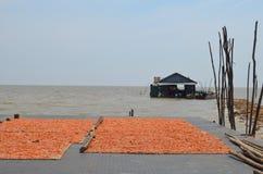 Essiccamento del gambero al sole in un villaggio di galleggiamento fotografia stock libera da diritti