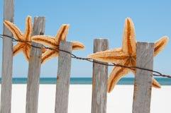 Essiccamento delle stelle marine sulla rete fissa Immagine Stock Libera da Diritti