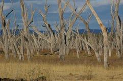 Essiccamento di Nuga Nuga del lago Fotografie Stock Libere da Diritti