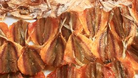 Essiccazione del pesce archivi video