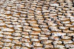 Essiccazione del pesce sul tessuto Fotografie Stock