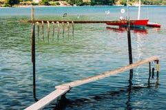 Essiccazione del polipo sulla corda immagine stock