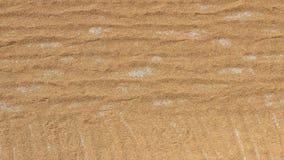 Essiccazione del riso dopo il raccolto video d archivio