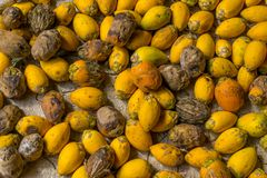 Essiccazione della noce di betel sotto il sole fotografie stock