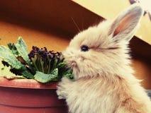 Está comendo minhas flores! Foto de Stock