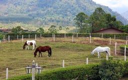 Estábulo do cavalo e escola de equitação modernos no celeiro na exploração agrícola com montanhas e na selva das casas no fundo Foto de Stock Royalty Free