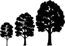 Estágios do crescimento da árvore/eps Fotos de Stock Royalty Free