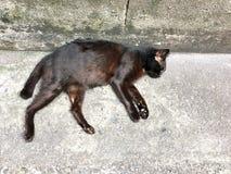 Estática do gato e sujo na rua Fundo perdido e desabrigado dos gatos foto de stock royalty free