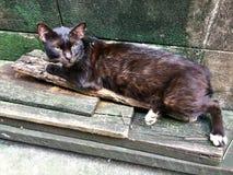 Estática do gato e sujo na rua Fundo perdido e desabrigado dos gatos imagens de stock