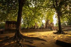Estátua da Buda com quadro da árvore fotografia de stock