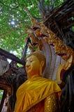 Estátua da Buda em Tailândia Ang Thong Fotografia de Stock Royalty Free