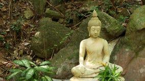 Estátua da Buda no jardim maravilhoso Estatueta bonita da Buda colocada perto dos pedregulhos musgosos e das plantas verdes em bo video estoque