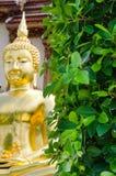 Estátua da folha e da Buda Imagem de Stock Royalty Free