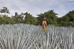 A estátua da Virgem Maria Blessed no campo da agave méxico foto de stock royalty free