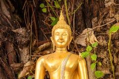 Estátua de Buddha sob a árvore Fotografia de Stock Royalty Free