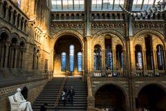 A estátua de Charles Darwin no salão principal do museu da história natural fotos de stock royalty free