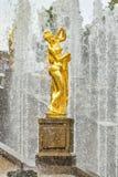 Estátua dourada de Venus Callipyge em Petergof, Rússia fotografia de stock