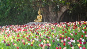 Estátua em um campo da tulipa, Chiang Mai da Buda, Tailândia Foto de Stock Royalty Free