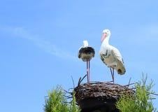 Estátuas das cegonhas Fotografia de Stock Royalty Free
