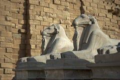 Estátuas das ram no templo de Karnak imagens de stock