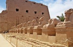 Estátuas de Egito antigo da esfinge no templo do karnak de Luxor Fotos de Stock Royalty Free