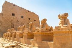 Estátuas de esfinges RAM-dirigidas no templo de Karnak imagem de stock