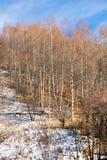 Estância de esqui Forest Tale perto de Almaty, Cazaquistão imagens de stock