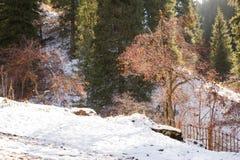 Estância de esqui Forest Tale perto de Almaty, Cazaquistão imagem de stock